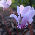 gardenphotographyspringsprout