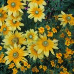 gardenphotographyyellowgarden2