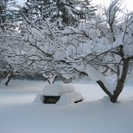 snow on picnic table
