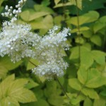 delicate whites