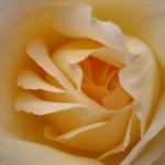 petal riff
