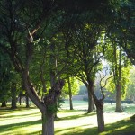 The morning light dances across lawns